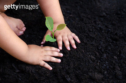 Tree Sapling Baby Hand On The Dark Ground The Concept Implanted Children'S Consciousness Into... - gettyimageskorea