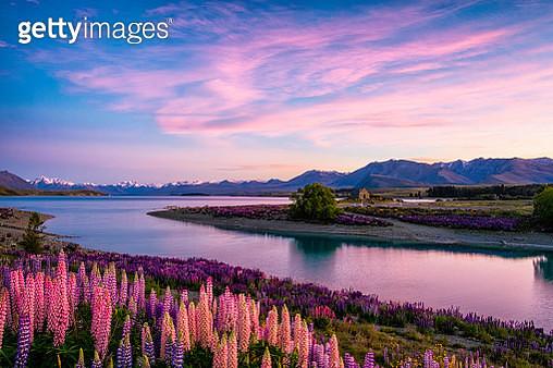 Lake Tekapo At Dawn, New Zealand South Island - gettyimageskorea