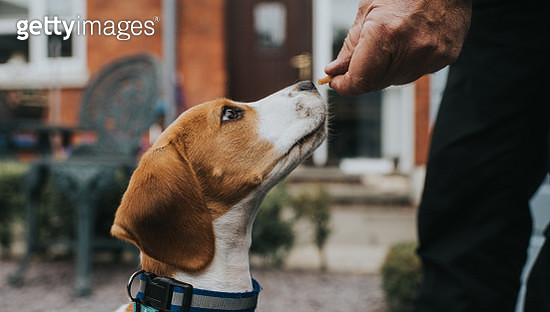 Dog Treat - gettyimageskorea