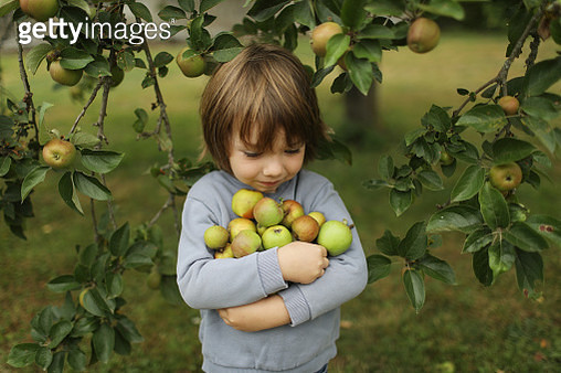 A little boy picking up apples from an apple tree - gettyimageskorea