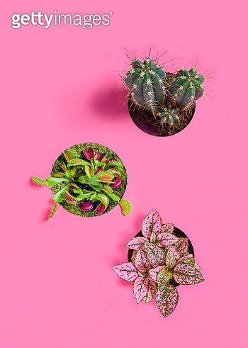 A group of three plants over a pink background. - gettyimageskorea