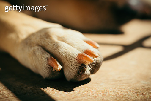 Close-Up Of A Dog Paw - gettyimageskorea
