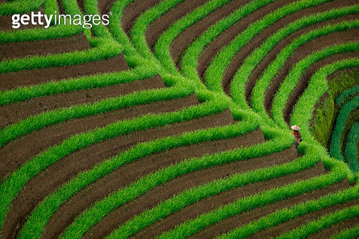 Rear View Of Man Standing At Terraced Field - gettyimageskorea
