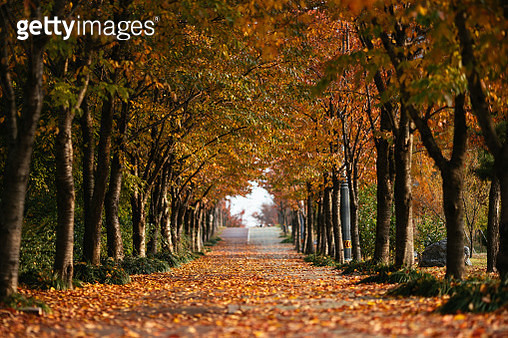 Empty alley covered by foliage in autumn - gettyimageskorea