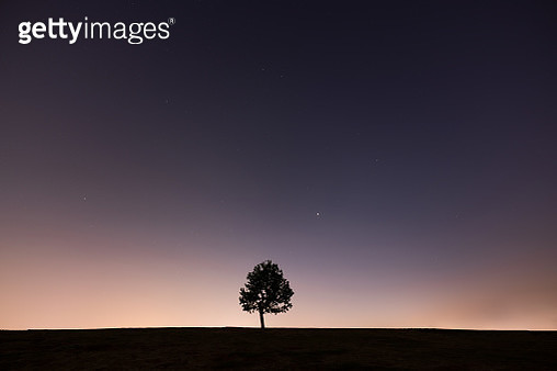 Hillside with a tree and stars background - gettyimageskorea