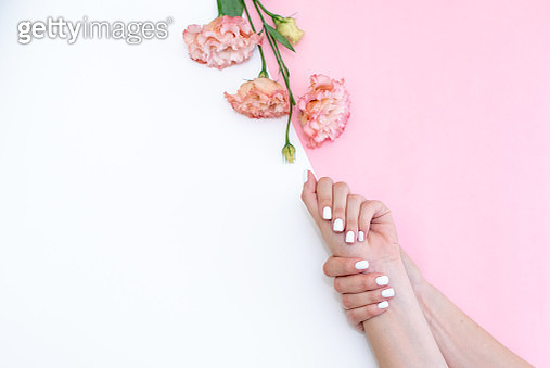beautiful white manicure. Pink flower in the hands of a girl. - gettyimageskorea