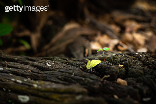 Close-Up Of Small Plant Leaves - gettyimageskorea