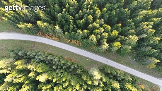 Aerial photo of forest - gettyimageskorea