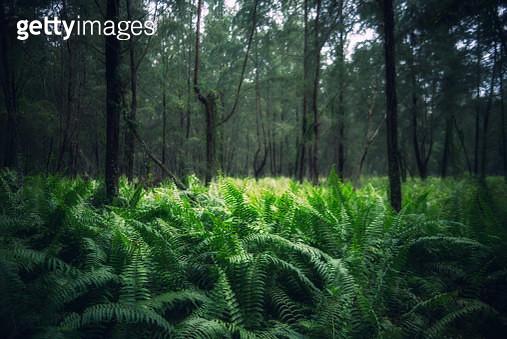 Green Ferns - gettyimageskorea
