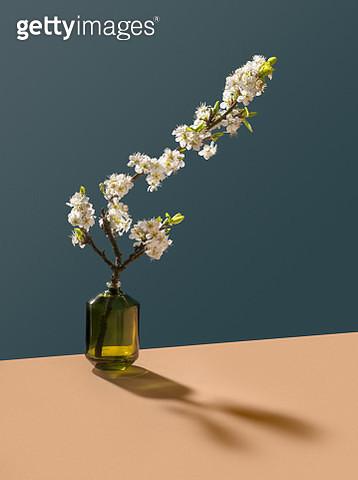 Blossom in glass bottle - gettyimageskorea