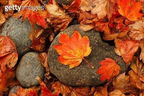 Fallen leaves - gettyimageskorea