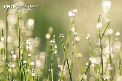 Morning dew - gettyimageskorea