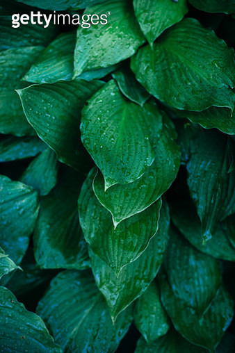 Botanical lush green spring or summer floral backgound. Green leaves texture. - gettyimageskorea