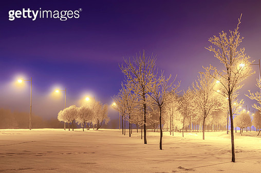 Trees on snow covered field against sky at night - gettyimageskorea