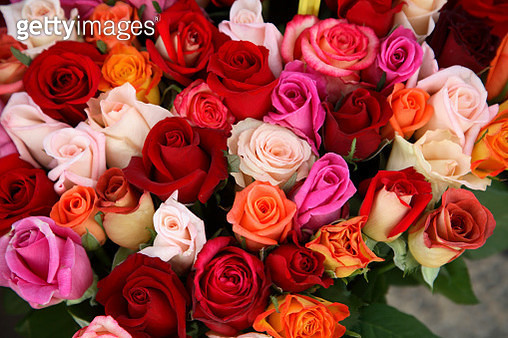 Roses for Sale at Flower Market - gettyimageskorea