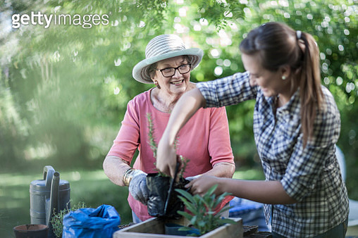 Senior woman and teenage girl gardening together - gettyimageskorea