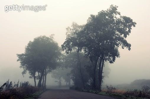 Autumn  foggy morning - gettyimageskorea