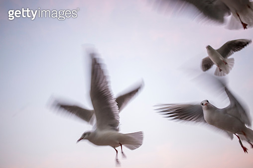 Low Angle View Of Seagulls Flying Against Sky - gettyimageskorea