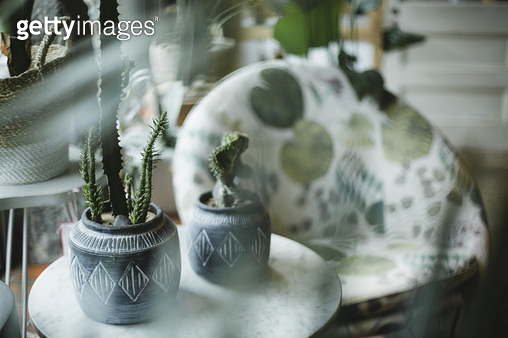 House plant - gettyimageskorea