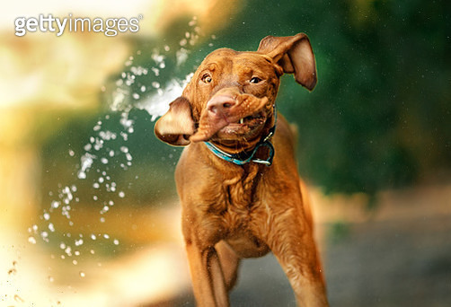Wet dog on the river - gettyimageskorea