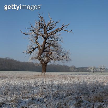 Winter Wonderland. - gettyimageskorea