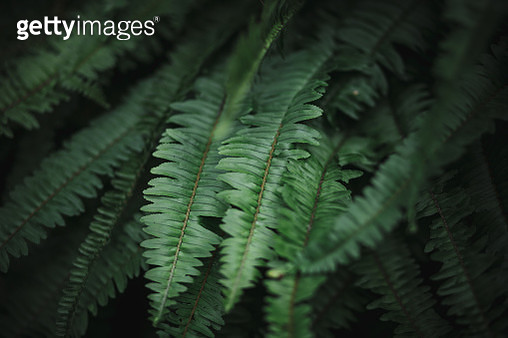 Close-Up Of Fern Leaves - gettyimageskorea