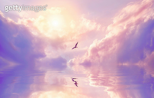 Seagull and violet clouds - gettyimageskorea