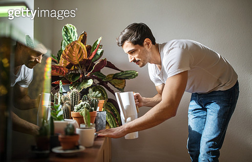 Young man watering cacti plants in his living room. Man giving water to cactus plants at home. - gettyimageskorea