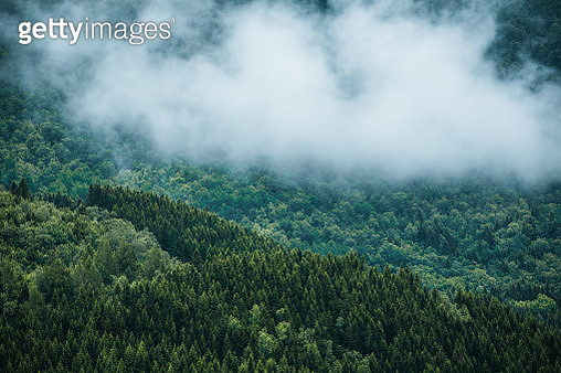 Mountain side full of trees and low clouds - gettyimageskorea