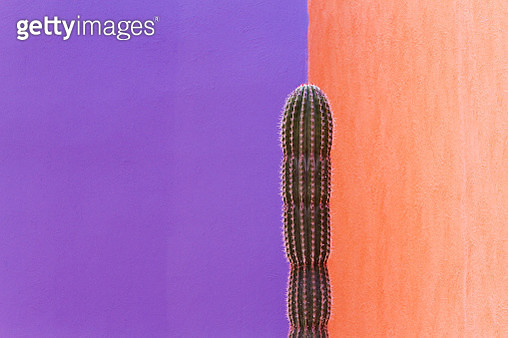 Cactus Against Contrasting Walls - gettyimageskorea