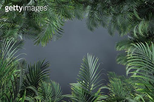 Palm Tree Leaves in a dark foggy - gettyimageskorea