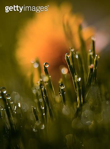 Close-Up Of Wet Flower - gettyimageskorea