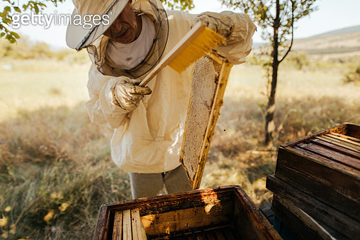 Photo of a beekeeper in apiary, checking his beehives - gettyimageskorea