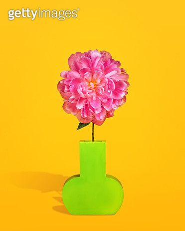 Bright pink peony blossom in a contemporary lime green vase on a yellow background. - gettyimageskorea