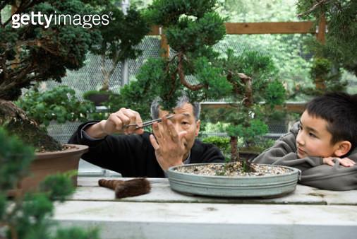 Senior Asian man trimming bonsai with childwatching in greenhouse. - gettyimageskorea