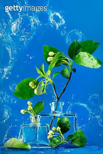 Spring Flowers on Blue - gettyimageskorea