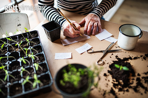 An unrecognizable woman writing labels for plant seedlings. - gettyimageskorea