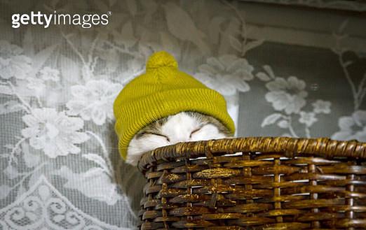 Cat wearing knit hat - gettyimageskorea
