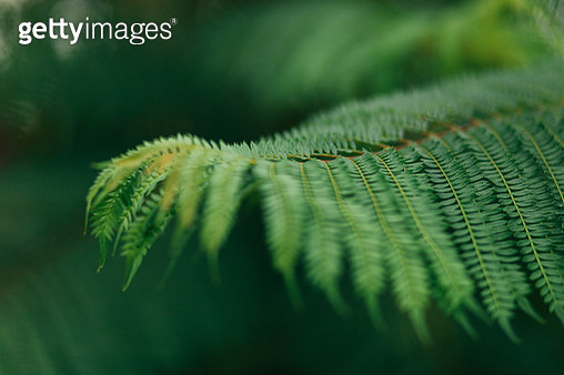 Close-Up Of Leaf On Tree - gettyimageskorea