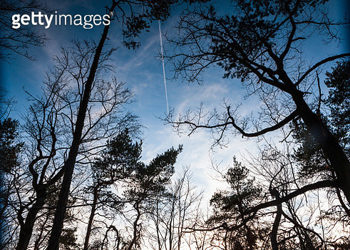 View at sky through bare trees in early spring - gettyimageskorea