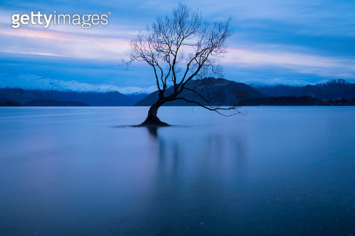 The Tree At Lake Wanaka, New Zealand - gettyimageskorea