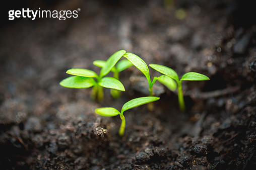 Fresh growth - gettyimageskorea