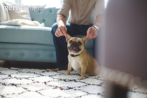 French Bulldog Ears - gettyimageskorea