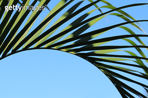 Palm frond against blue sky 1 - gettyimageskorea