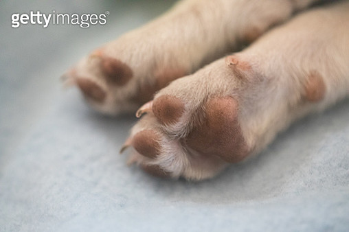 A white puppy two front paws - gettyimageskorea