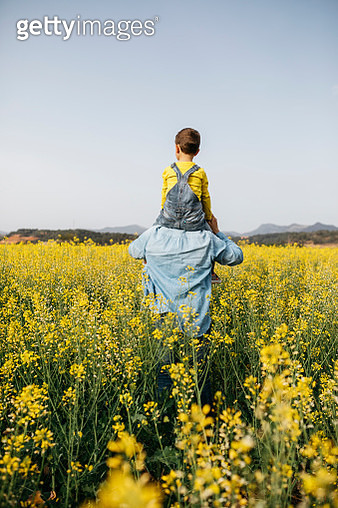 Spain, back view of man with his son on his shoulders walking through a field of yellow flowers - gettyimageskorea