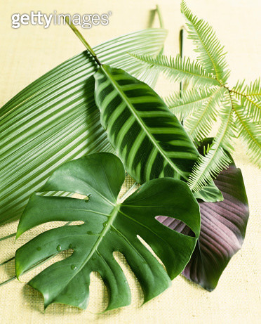 Assorted tropical leaves - gettyimageskorea