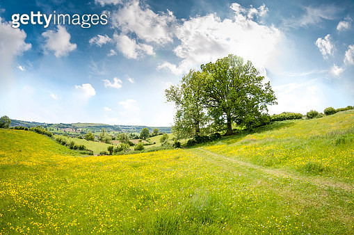 Beautiful Rolling Landscape On A Summers Day - gettyimageskorea