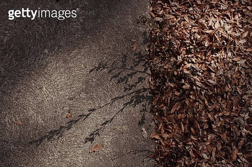 High Angle View Of Leaves By Road - gettyimageskorea