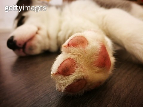 Close-Up Of Dog Sleeping - gettyimageskorea
